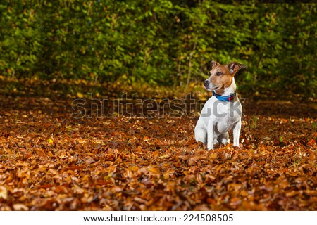 dog run away in the park, now it is lost and can not be found - stock photo
