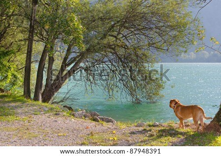Dog running along the bank of mountain lake - stock photo