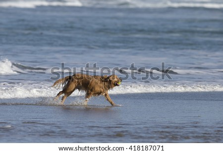 Dog running in surf on Morro Bay California