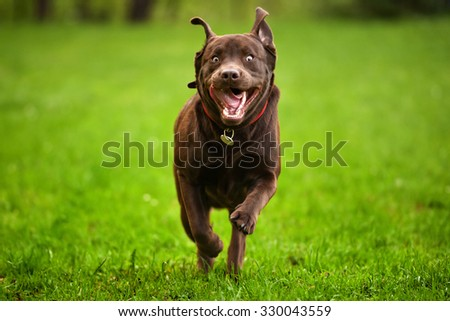 Dog running through a meadow - stock photo