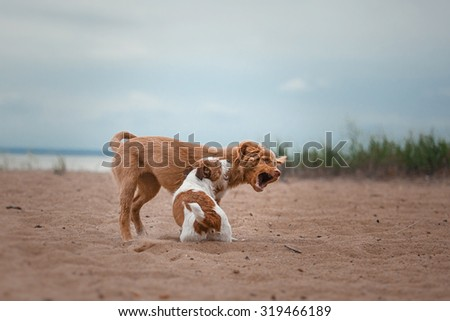Dog runs on the beach to play an active