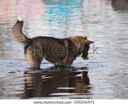 dog runs on water