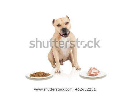 Dog's choice between dry fodder and  pork meat at isolated white background