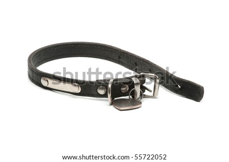 dog's collar - stock photo