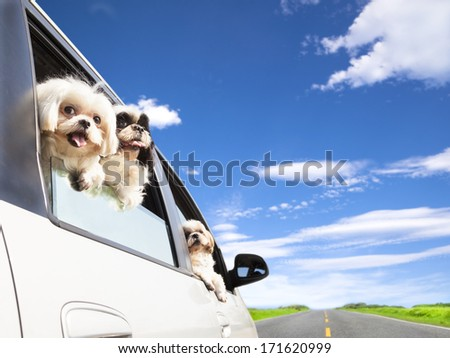 dog's family traveling  in the car  - stock photo