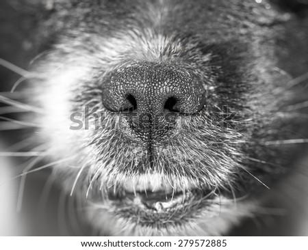 dog's nose - stock photo