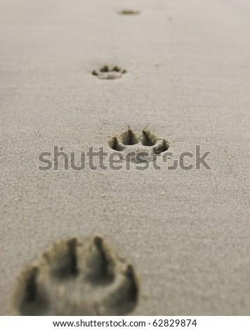 Dog's paw prints on the sandy beach - stock photo