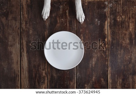 Dog's paws on old vintage brushed wooden table with white empty ceramic plate top view. Concept - stock photo
