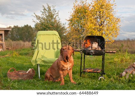 Dog's Picnic With Barbecue (Grill) Set With Burning Fair - stock photo