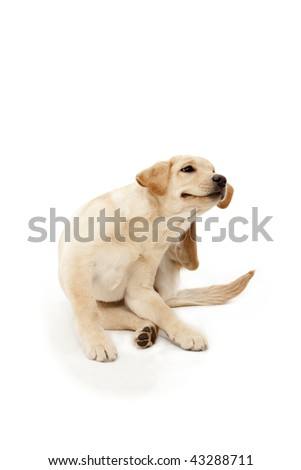 Dog Scratching Ear - stock photo