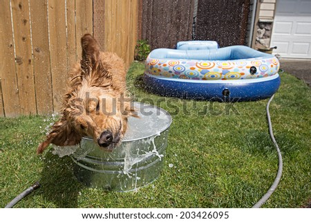 Dog shaking during a bath - stock photo