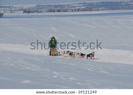 DOG SHED RACE - stock photo