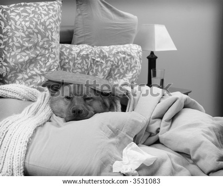 Dog sick in bed - Sick as a dog concept