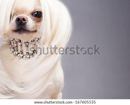 dog sitting and looking at camera - stock photo
