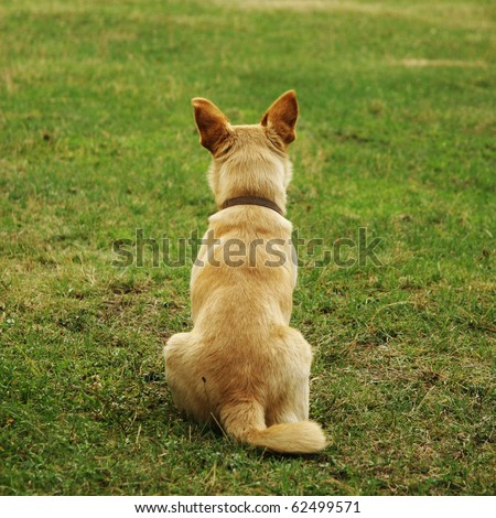 dog sitting back on the grass - stock photo