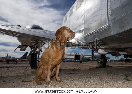 dog sitting beside an airplane
