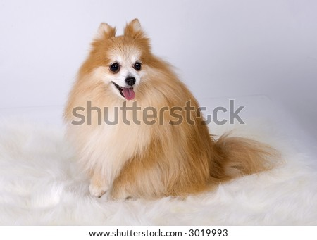 Dog sitting down looking away from the camera with one paw pulled up - stock photo