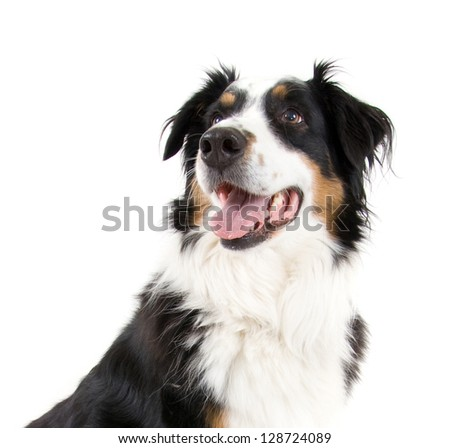 dog sitting in front of a ball - stock photo