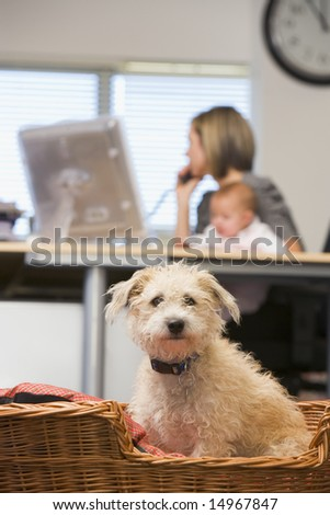 Dog sitting in home office with woman holding baby in background - stock photo