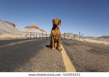 dog sitting in the middle of the road - stock photo