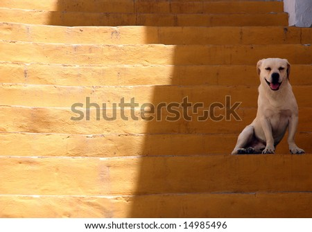 Dog sitting in the shade of a link in a ladder