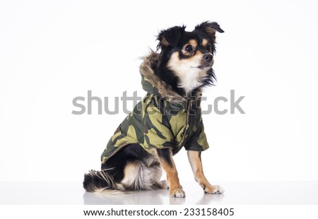 Dog sitting looking right side wearing military jersey - stock photo