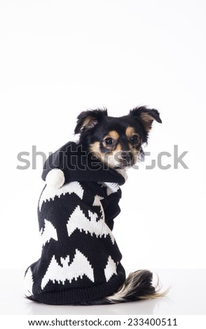 Dog sitting looking side wearing jersey - stock photo