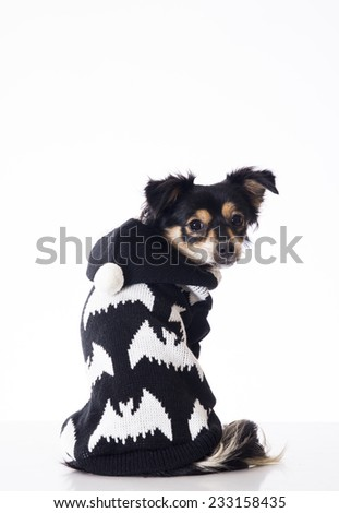 Dog sitting looking to camera - stock photo