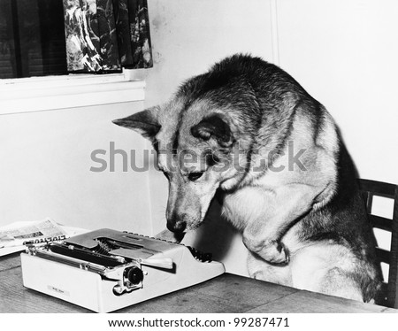Dog sitting on a chair looking at the typewriter - stock photo