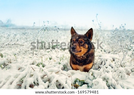 Dog sitting on a snowy field - stock photo