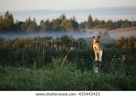 Dog sitting on the cage in morning fog - stock photo