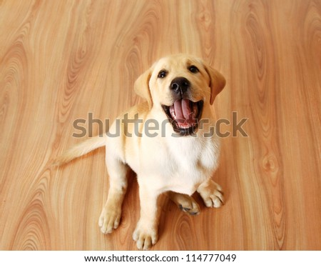 dog sitting on the floor - stock photo