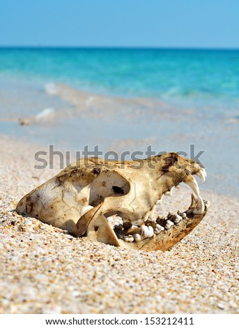 Dog skull on the beach against blue sky - stock photo
