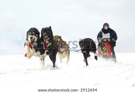 dog sled action