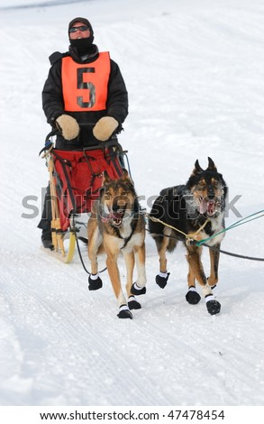 Dog Sled race with the two strongest dogs and the musher - stock photo