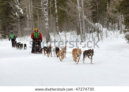 Dog Sled Races in the Mountains - stock photo