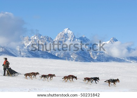 Dog Sled Racing - stock photo