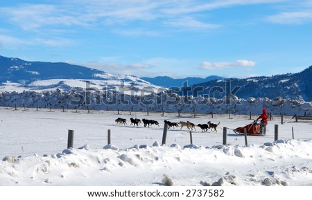 Dog Sled Team in Wyoming - stock photo