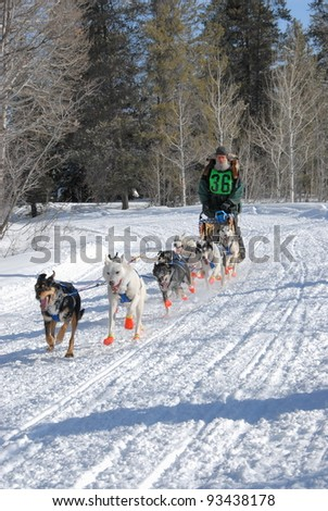 Dog sled team musher running his team through the mountains. - stock photo