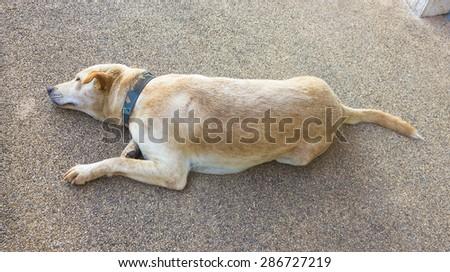 Dog sleeping. - stock photo