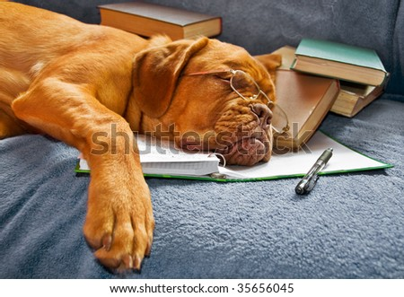 Dog Sleeping in her Notebook after Studying - stock photo