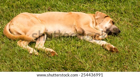 dog sleeping on grass - stock photo
