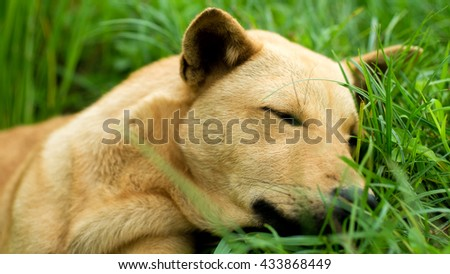Dog sleeping on green grass.selective focus - stock photo