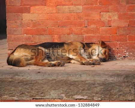 dog sleeping on the street - stock photo