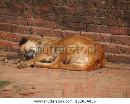 dog sleeping on the street near the redd brick wall - stock photo