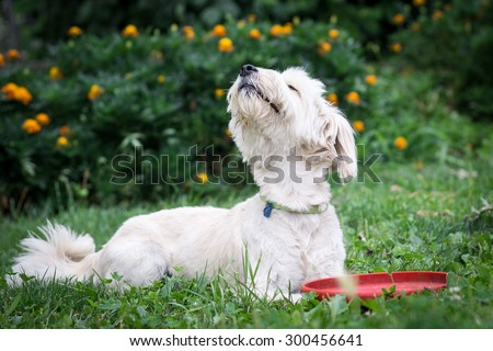 Dog smelling the air - stock photo
