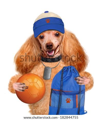 dog sports - stock photo
