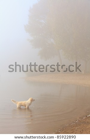 Dog standing in a lake along the shore on a misty morning - stock photo