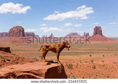 dog standing in Monument Valley tribal park with butte formations in the background - stock photo