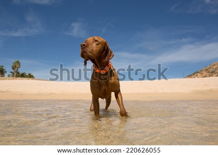 dog standing in water - stock photo